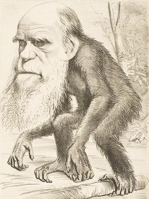 karikatura Darwina kot naslednika opice