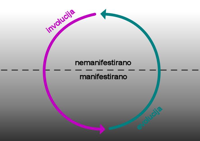 manifestativni cikel: involucija in evolucija